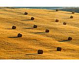 Field, Straw bales, Field stubble