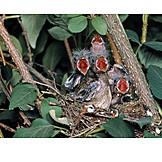 Bird's nest, Hungry, Bird's nest, Spawn