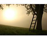 Tree, Fog, Silence