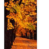 Tree, Alley, Chestnut tree