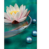 Water lily, Spa, Bath beads