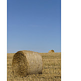Agriculture, Straw Bales, Harvest