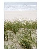Marram grass, Dune