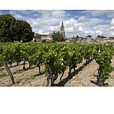Bordeaux, Viticulture
