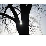 Tree, Completely bald