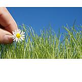 Grass, Pick, Daisy
