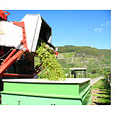 Harvest, Viticulture
