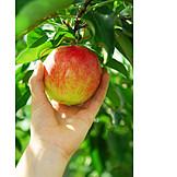 Apple, Reif, Pick