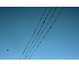 Power line, Swallow