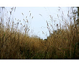 Grasses, Blade of grass