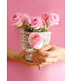 Rose, Mothers day, Valentine, Gifts
