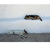 Resting, Dog, Greece