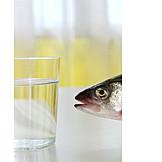 Fish, Water, Habitat, Dehydration