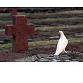 Cross, Dove, Memorial, Symbols of peace