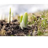 Macro, Spring, Crocus