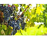 Grape, Vine, Vine, Red grapes