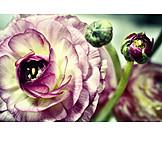 Blossom, Buttercup, Ranunculaceae