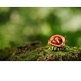 Moss, Chestnut tree