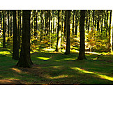 Forest, Forestry