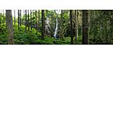 Waterfall, Forest, Enchanted , Castle creek waterfall
