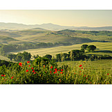 Landscape, Hill landscape, Tuscany