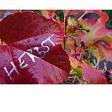 Autumn, Grape leaf, Wine