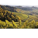 Vineyard, Baden wurttemberg, Wine, Growing region