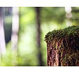 Moss, Tree stump