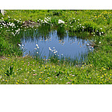 Pond, Cotton, Mountain meadow