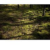 Moss, Forest