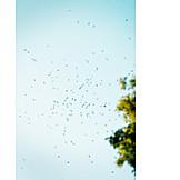 Mosquito, Mosquitos, Mosquito swarm