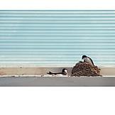 Nesting, Swallows