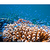 Coral reef, School of fish, Coral