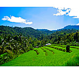 Agriculture, Bali