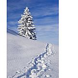 Winter, Winter Landscape, Fir, Snow, Snow Track