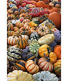 Squash, Ornamental gourd