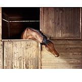 Horse, Barn, Stable
