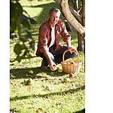 Man, Gardening, Apple harvest