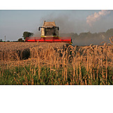 Harvest, Combine, Grainfield