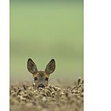 Curiosity & expectation, Deer