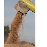 Harvest, Grain Harvest, Threshing