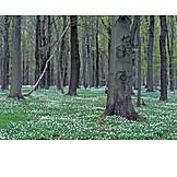 Forest, Spring, Flower Bed