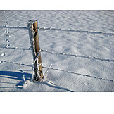 Fence, Snow, Fence