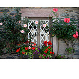 Window, Rural scene, Rose trellis