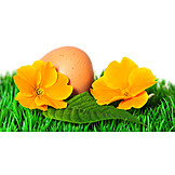 Easter Egg, Spring