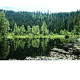 Black forest, Buhlbach lake