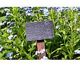 Garden, Forget-me-not, Garden Center, Slate