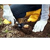 Agriculture, Potato, Outbuilding, Potato harvest