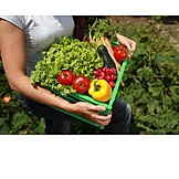 Vegetable garden, Basket, Vegetable harvest, Vegetable box