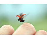 Flying, Departures, Lady beetle